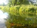 река Тара,Мстера,Вязниковский район,лето,
