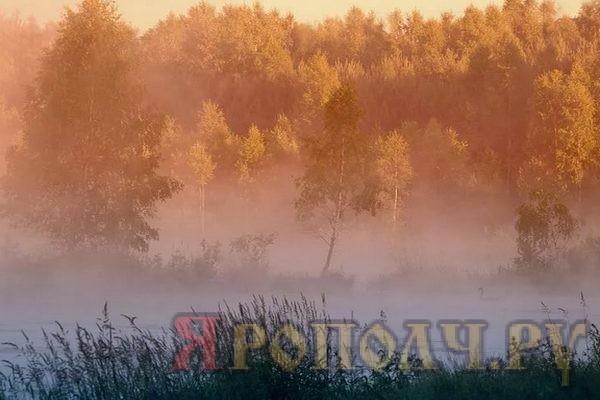 туман,сентябрь,осень,