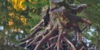 Почему 17 октября наши предки не ходили в лес и старались не выходить из дома?