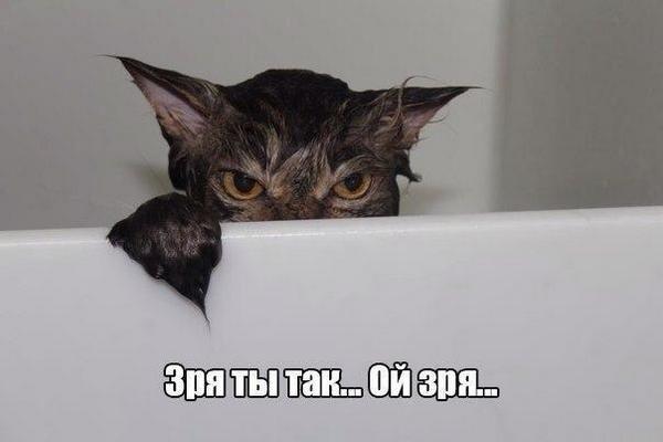 месть,кот,