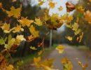 ветер,осень,листья.октябрь,