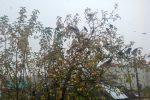 яблоня,октябрь,галки,яблоки,осень,