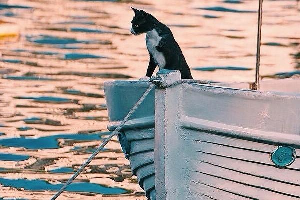 навигация,водная навигация,навигация маломерных судов,