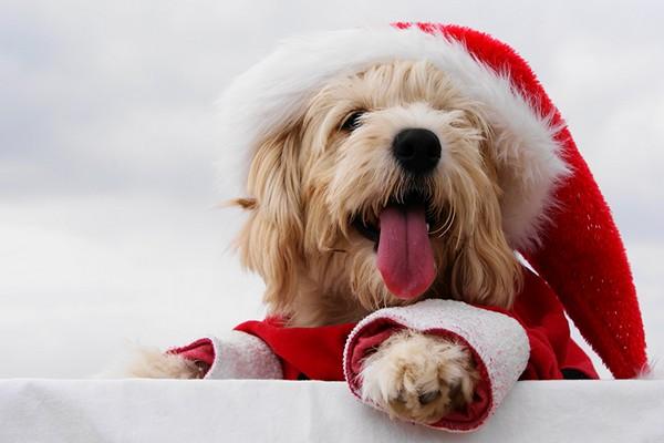 год собаки,2018 год,новый год,