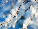 снег,иней,ветви деревьев в снегу,зима,мороз,