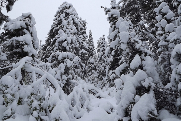 зима,снег,ели,никола зимний,