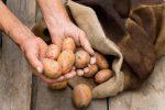 картофель,картошка,