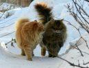 зима,кошки,