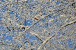 морозный день,холодно,ветка дерева в инее,иней на ветках,