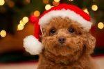 год желтой собаки,собака,новый год,