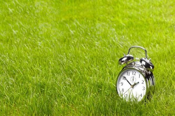часы,будильник,зеленая трава,здоровье,