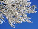 ветка,зима,февраль,