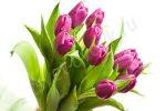 цветы,букет,тюльпаны,8 марта,