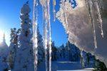 лес,сосульки.март,снег,