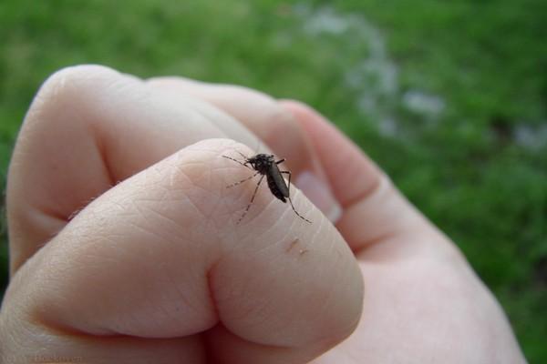 комар,