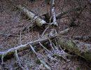 валежник,поваленный лес,
