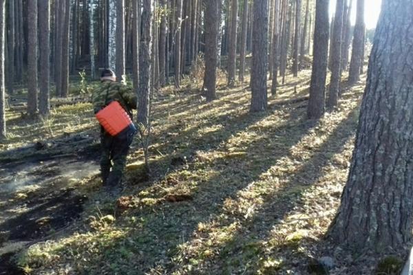 Лесной пожар в 11 километрах от Гороховца