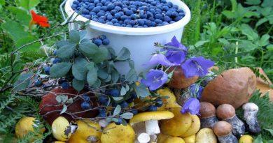 сбор грибов и ягод,