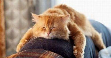кот отдыхает,дополнительный выходной,