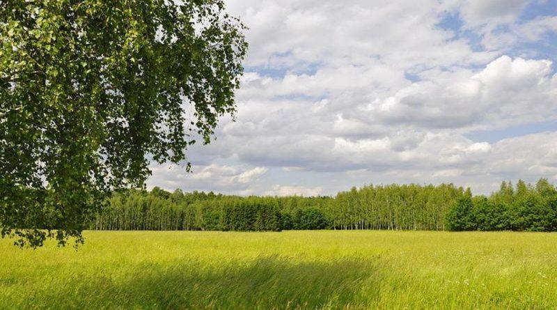 лето,поле,