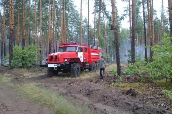 Лесной пожар ликвидировали