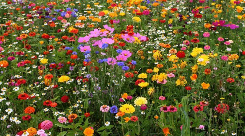 полевые цветы,