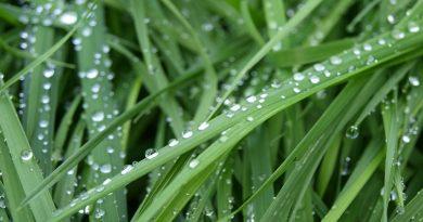 роса на траве,