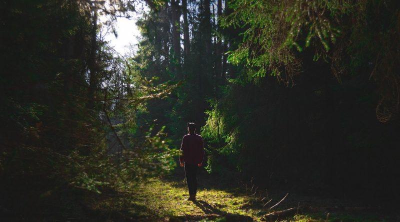 поход в лес,заблудился в лесу, что надо делать чтобы не заблудиться в лесу,