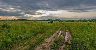 лето,поле,пасмурно,после дождя,