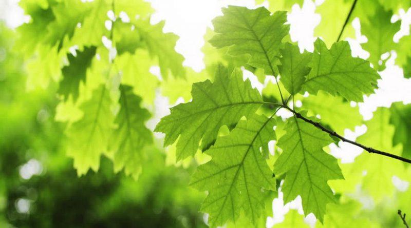 листва,жара,бабье лето,