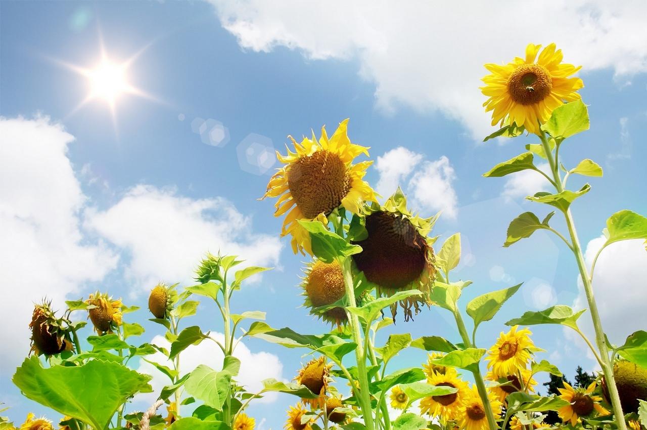 Погода на пятницу, 7 сентября: бабье лето продолжает радовать
