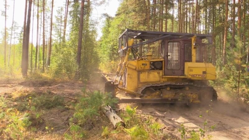 Владимирская область,Петушинский район,горят леса,природный пожар,лесной пожар,