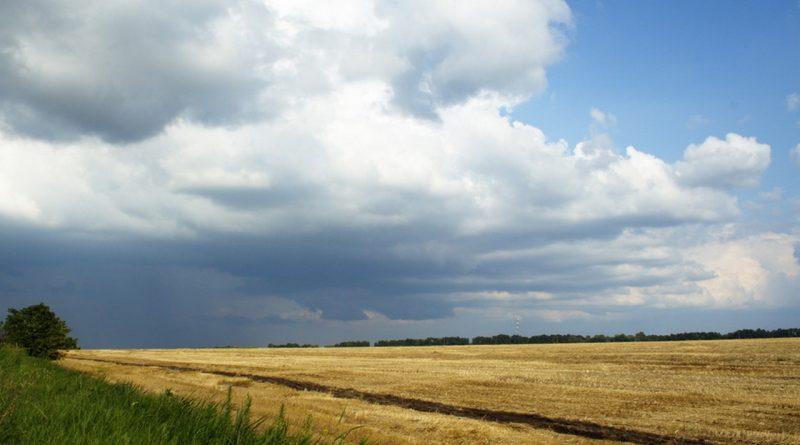 поле,август,лето,тучи,небо,