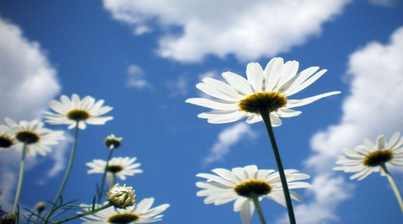 облака,лето,небо,ромашки,ясная погода,тепло,ясное небо,