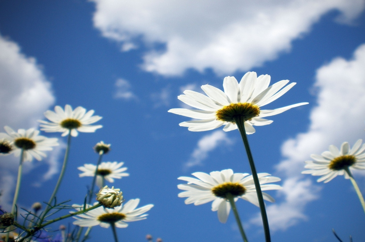 Погода на воскресенье, 26 августа: без осадков и жара под 30