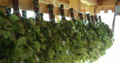березовые веники