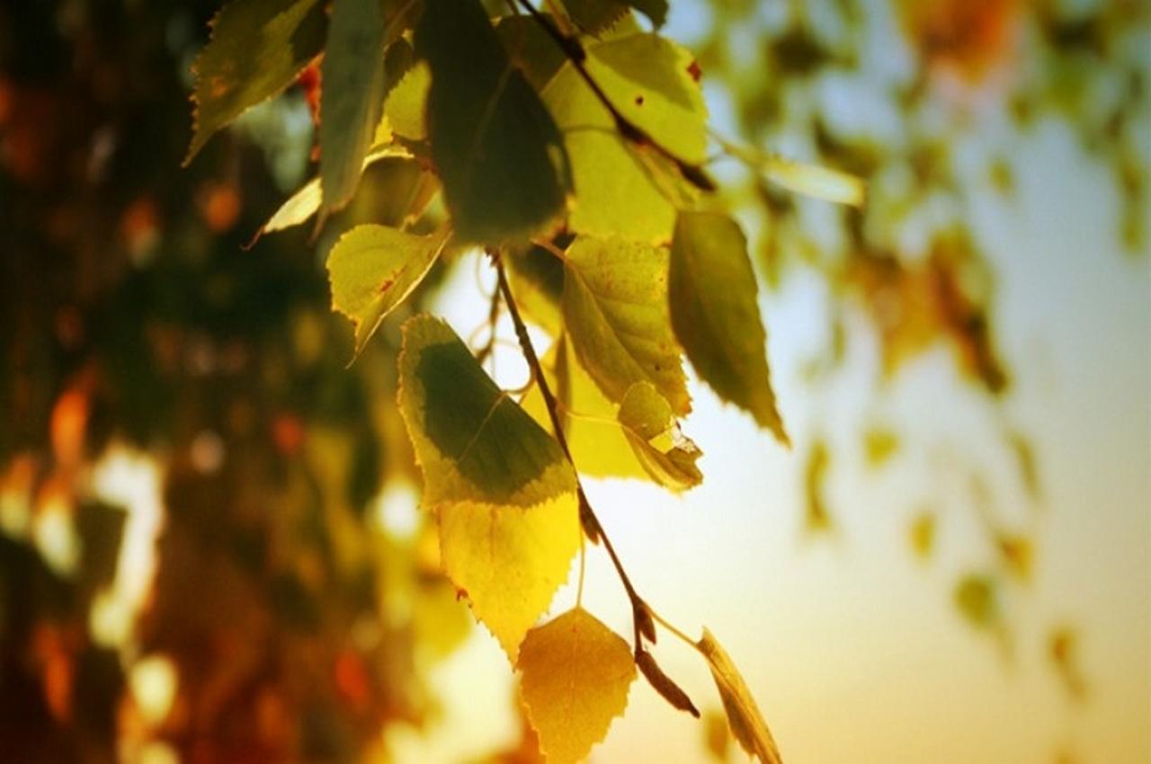 14 сентября – народный праздник Семён Летописец. Традиции и приметы