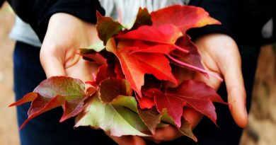 осенние листья,осенняя хандра,