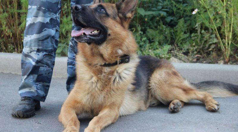 Полицейский пёс нашёл заблудившегося в лесу и увязшего в болоте мужчину
