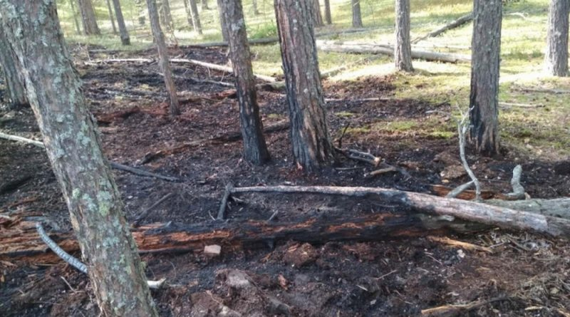 лесной пожар,