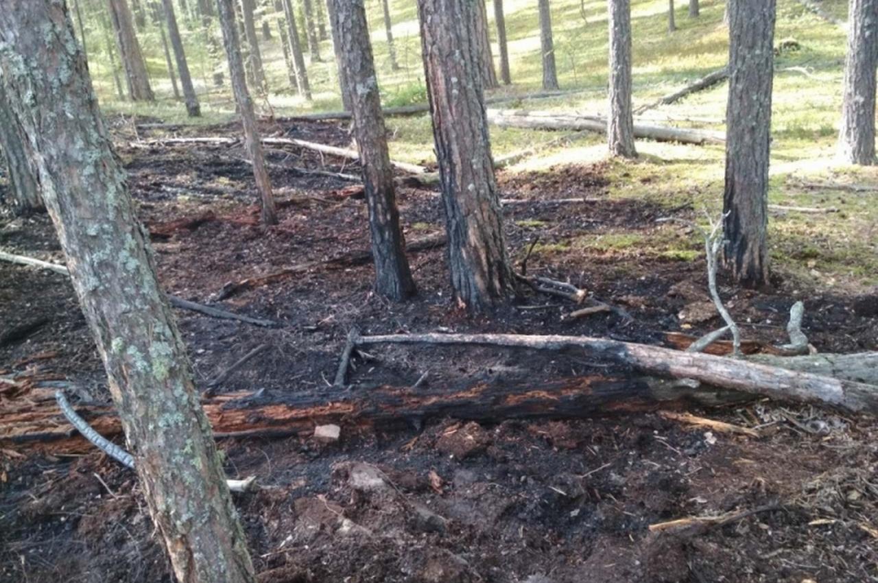 В Гороховецком районе горел военный лес