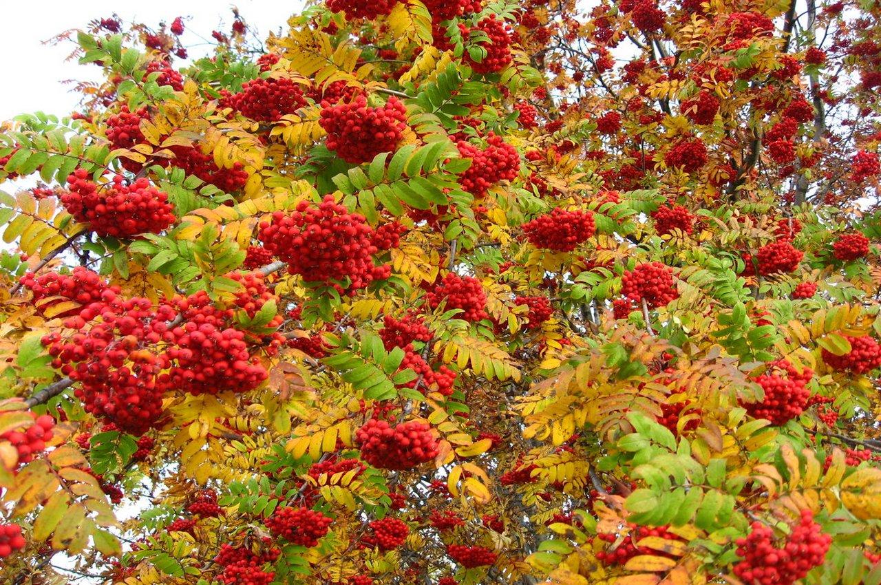 9 сентября — народный праздник Два Пимена. Традиции и приметы