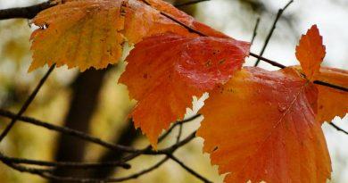 листья,осень,октябрь,