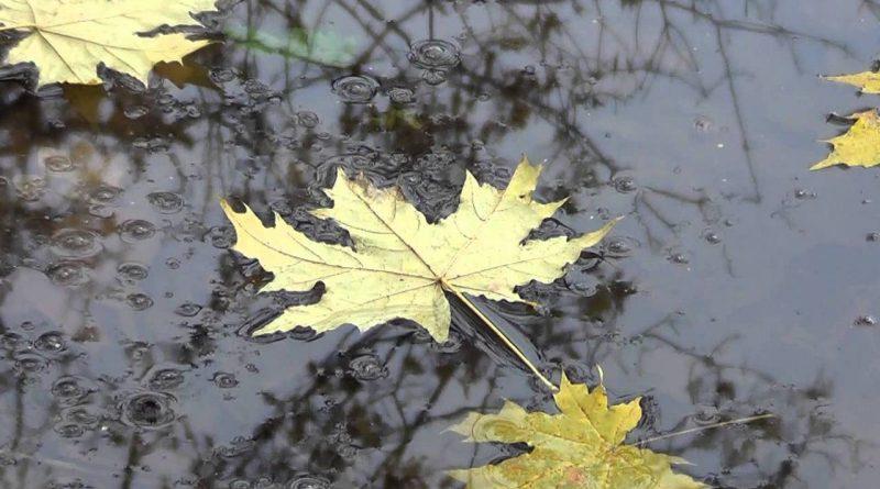 осень,опавшие листья клена,дождь,