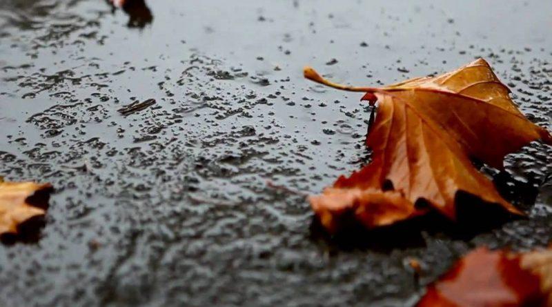 осень,дождь,опавший лист,