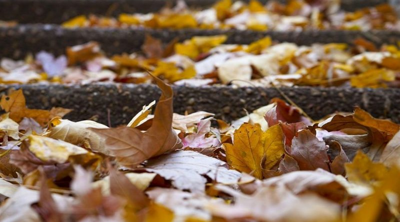 листопадная,5 октября,фока и иона,опавшие листья,осень,