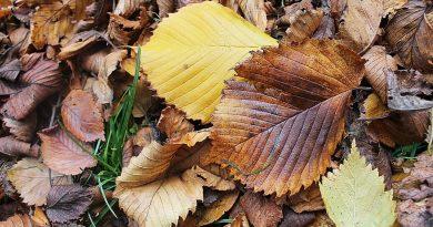 осень,листья,