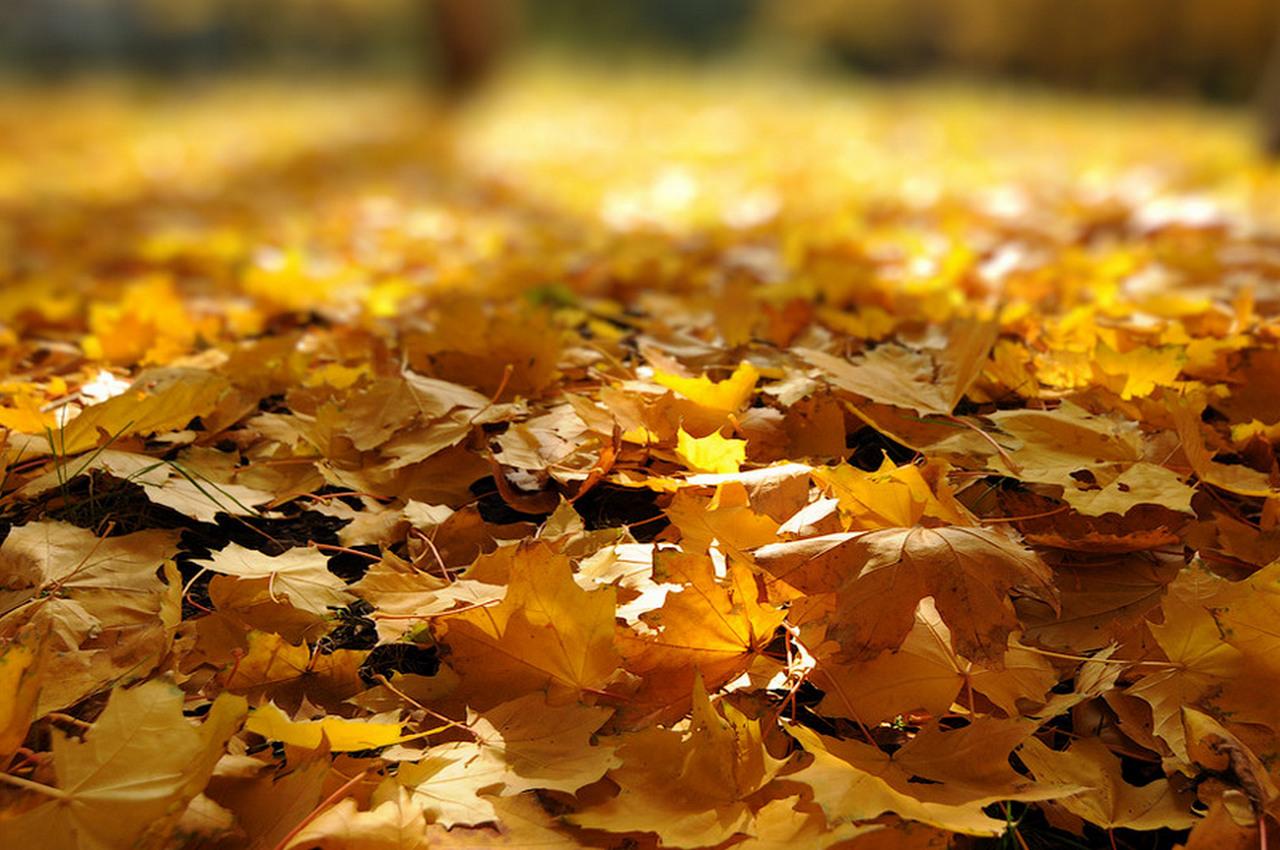 Погода на пятницу, 9 ноября
