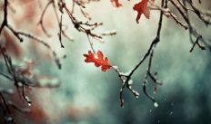 Погода на пятницу, 26 октября 2018 года: дождь и мокрый снег