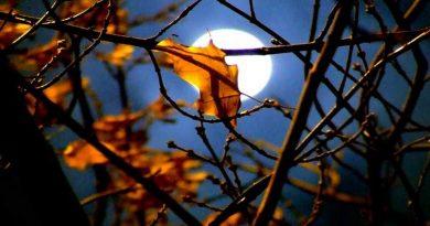 луна,осень,ноябрь,календарь цветовода,лунный календарь,